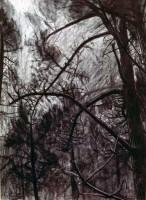 Pines near Croydon Monastry No.1 SOLD